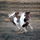 Bucking Pinto Horse by NaturePrints