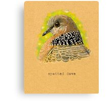 Spotted Dove Bird Canvas Print