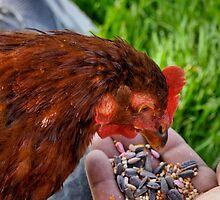 happy hen by Lenny La Rue, IPA