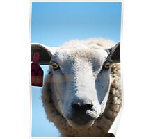 Sheep Portrait Poster