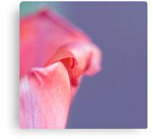 Macro Tulip Canvas Print