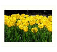 Tulips! Art Print
