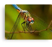 Backyard Dragonfly Canvas Print