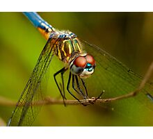 Backyard Dragonfly Photographic Print