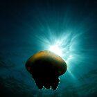 Canon Ball Jellyfish by Duncan Macfarlane