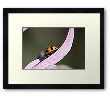 """Ladybug - backyard macro"" Framed Print"