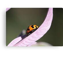 """""""Ladybug - backyard macro"""" Canvas Print"""