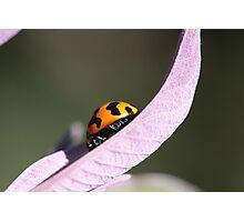 """""""Ladybug - backyard macro"""" Photographic Print"""