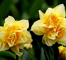 Daffy Dills by BarbL