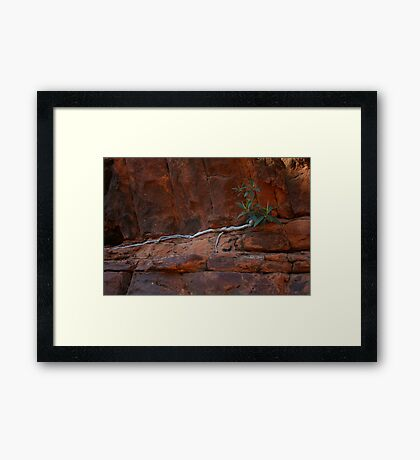 Fig Tree Framed Print