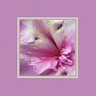 Azalea Homewares by Joy Watson