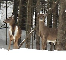 Near Big Moose by anniepage