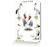 Cranes of India Greeting Card