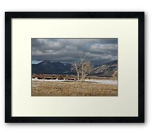 Mountain Cows Framed Print