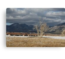 Mountain Cows Canvas Print