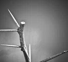 Thorns Minor by rbnikonphoto