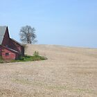 Spring FIeld  by clizzio