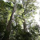 Fraser Island No. 7 by DanikaL