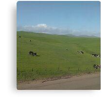 Cow Pasture Canvas Print