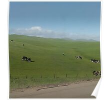 Cow Pasture Poster