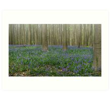 Hallerbos Blues Art Print