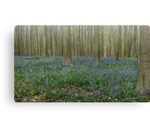 Hallerbos Blues Canvas Print