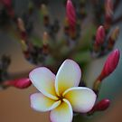 Bloom In Broome by Kylie Roberts