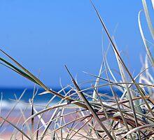 Beach Grass by dentalphotoart