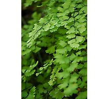 The Simple Fern Photographic Print