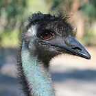 Mohawk on Blue Neck by shoshanah
