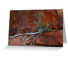 Fig Tree Close Greeting Card