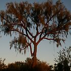 Blood Tree by Howza