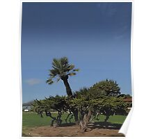 Tree Patch Poster