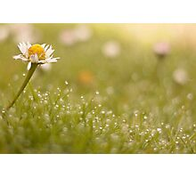 Don't Eat The Daisies Photographic Print
