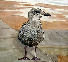 """The Opportunist"" - Juvenile Seagull (Seeking a Chip!) by Timothy Smith"