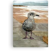 """The Opportunist"" - Juvenile Seagull (Seeking a Chip!) Canvas Print"