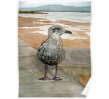 """""""The Opportunist"""" - Juvenile Seagull (Seeking a Chip!) Poster"""