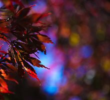 Red leaves  by NMPhotography