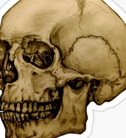 Anatomical Adult Skull Sticker