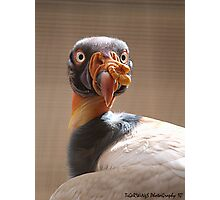 One Ugly Buzzard  Photographic Print