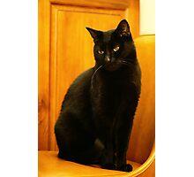 My Pet Panther Photographic Print