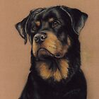 Rottweiler by Charlotte Yealey