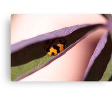 """Ladybug Hide Out - (macro backyard)"" Canvas Print"