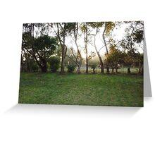 Sunrise through the Mist on Stokes' Farm - Kirkstall, Vic Greeting Card