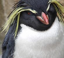 Rockhopper Penguin by faith-in-ink