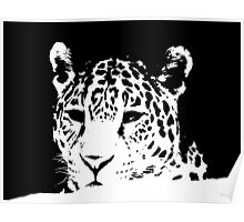 Black and White Big Cat Poster