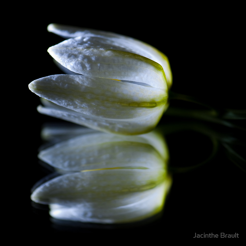 Peaceful Beauty 5 by Jacinthe Brault