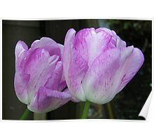 Lilic and White Tulips Poster