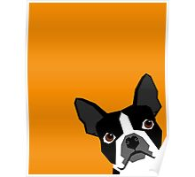 Peeking Boston Terrier funny dog art customizable gift for dog lovers dog person must haves Poster