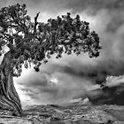 Grand Old Tree by Bryan Peterson